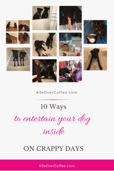 K9sOverCoffee.com | 10 Ways To Entertain Your Dog Inside On Crappy Days
