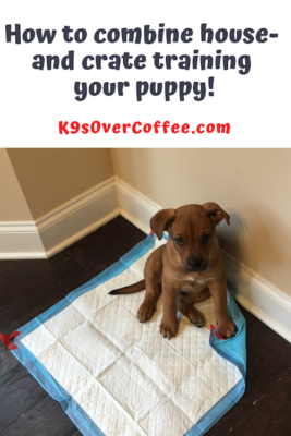 K9sOverCoffee.com | How to combine house and crate training your puppy