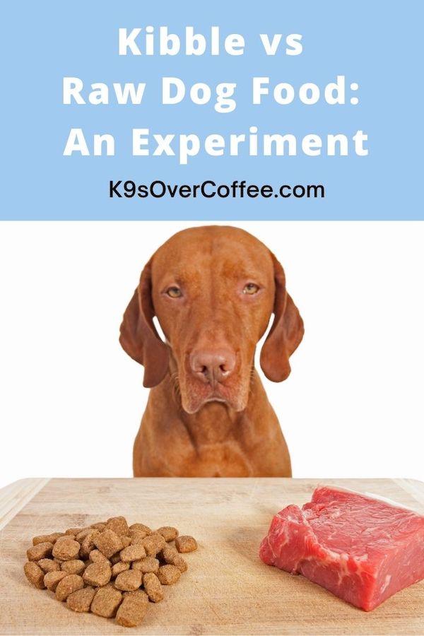 raw dog food or kibble?