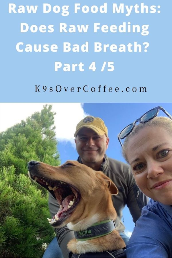 K9sOverCoffee.com | Raw Dog Food Myths: Does Raw Feeding Cause Bad Breath? Part 4/5