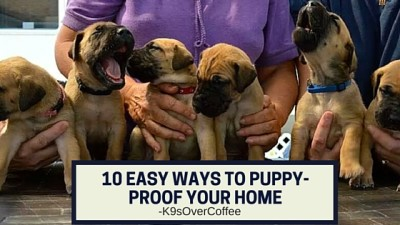 K9sOverCoffee | 10 Easy Ways To Puppy Proof Your Home