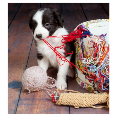 10 Easy Ways To Puppyproof Your Home