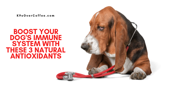 K9sOverCoffee | Boost Your Dog's Immune System with these 3 Natural Antioxidants