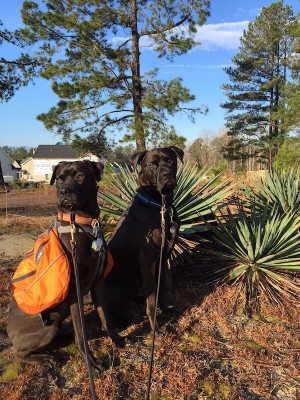 Missy & Buzz Out On Our Morning Backpack Walk