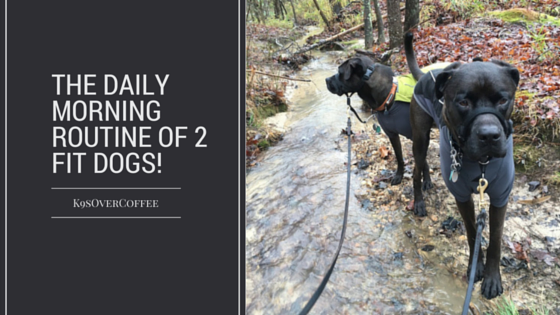 The Daily Morning Routine Of 2 Fit Dogs