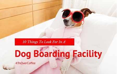 K9sOverCoffee | 10 Things To Look For In A Dog Boarding Facility