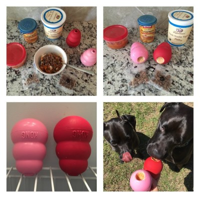 How To Keep Your Pup Entertained With Vital Essentials Freeze-Dried Nibs and a KONG Food Puzzle!