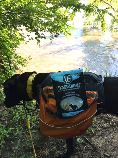 Missy Carrying the Vital Essentials Freeze-Dried Minnows in Her Ruffwear Dog Pack