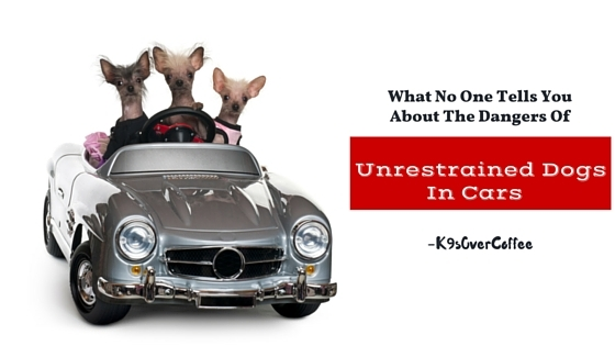 What No One Tells You About The Dangers Of Unrestrained Dogs In Cars