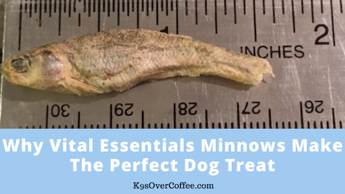 K9sOverCoffee | Why Vital Essentials Minnows Make The Perfect Dog Treat