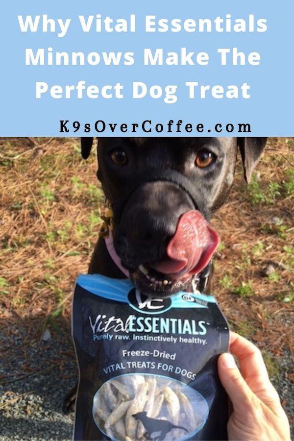 K9sOverCoffee.com   Why Vital Essentials Minnows Make The Perfect Dog Treat