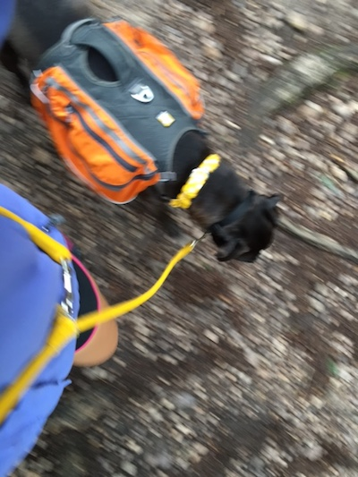 K9sOverCoffee | Missy Hiking With COLLAR's Adjustable Glamour Leather Leash, Worn Around Torso