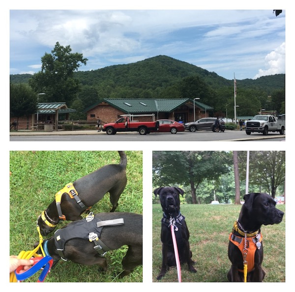 Missy & Buzz At A Rest Stop In The Great Smoky Mountains in NC