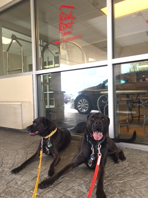 Missy & Buzz ready for their stay at pet-friendly Red Roof Inn