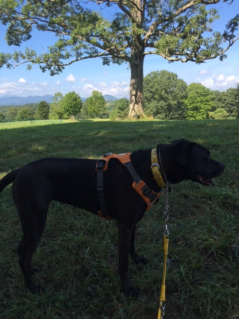 Missy & Mommy Went For A Walk With Breathtaking Views At Biltmore Estate