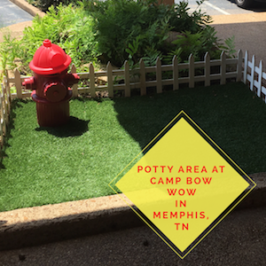 Potty Area at Camp Bow Wow in Memphis, TN