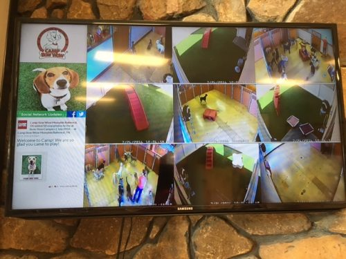 Webcams At Camp Bow Wow in Memphis, TN