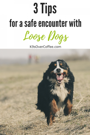 K9sOverCoffee.com | 3 Tips For A Safe Encounter With Loose Dogs