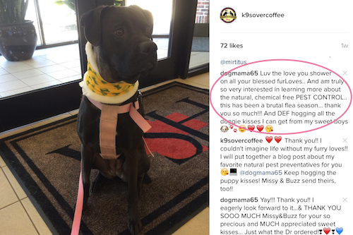 K9sOverCoffee | Instagram Follower Asks For Chemical-Free Pest Control Options For Dogs