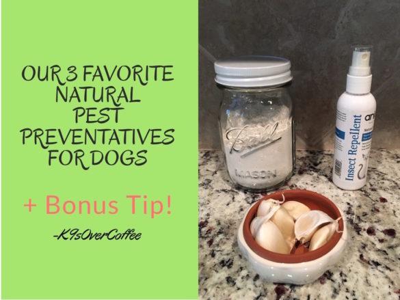 Our 3 Favorite Natural Pest Preventatives For Dogs + Bonus Tip