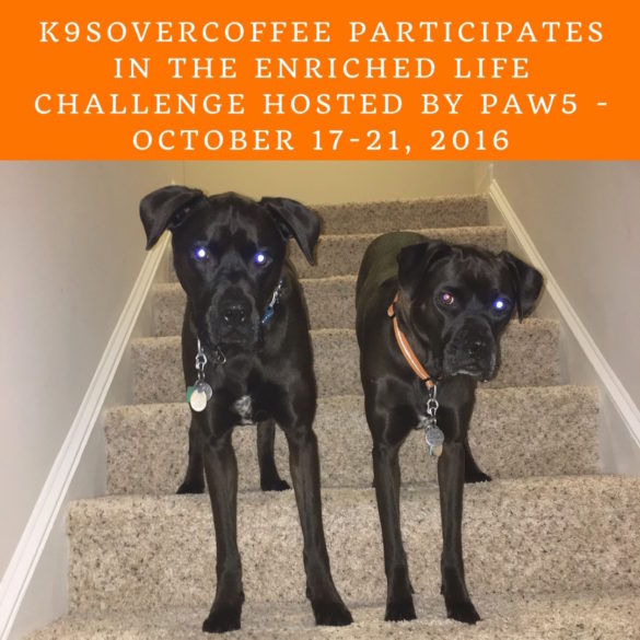 K9sOverCoffee participates in The Enriched Life Challenge Hosted By Paw5 from October 17-21, 2016