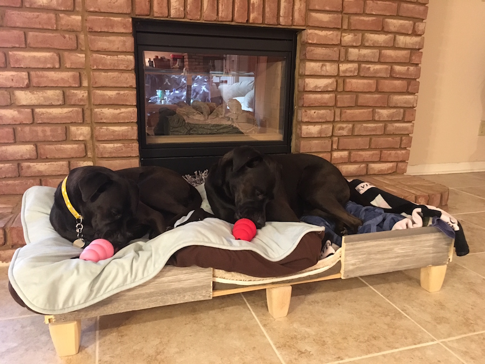 K9sOverCoffee | Missy & Buzz Enjoying Their Thanksgiving KONGs In Their Rustic DIY Dog Bed Frame
