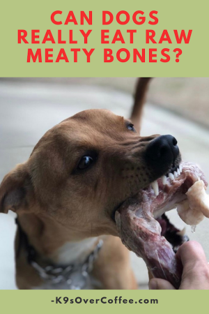 Raw meaty bones are an integral part of balanced raw dog food and safe to feed as long as a few guidelines are observed.