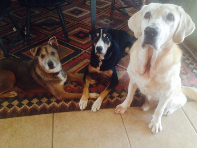 K9sOverCoffee   An Interview With Healthy Dog Food Advocate Lizzy Meyer from WholeHorseConsulting - Finn, Loma, & Tristan