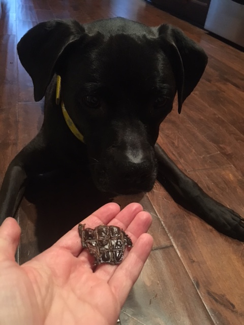 K9sOverCoffee | What's Inside Our Real Dog Treat Subscription Box This Month? - Chicken Livers