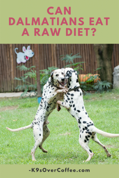 K9sOverCoffee | Can Dalmatians Eat A Raw Diet?
