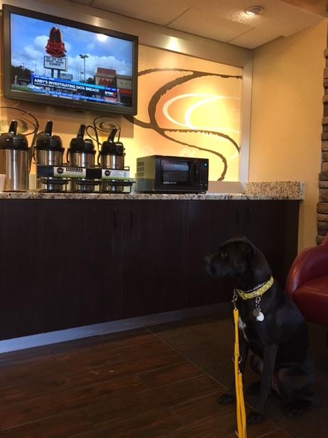 K9sOverCoffee | Winter Getaway to Hilton Head Island's Dog-Friendly Red Roof Inn - 24/7 Coffee And Tea In The Lobby