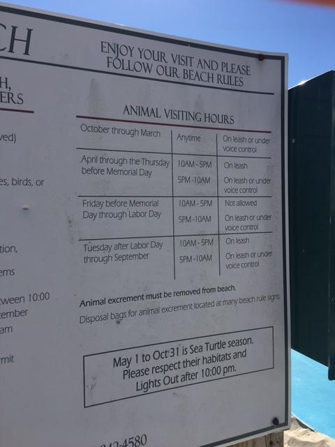 Beach Dog Rules On Hilton Head Island