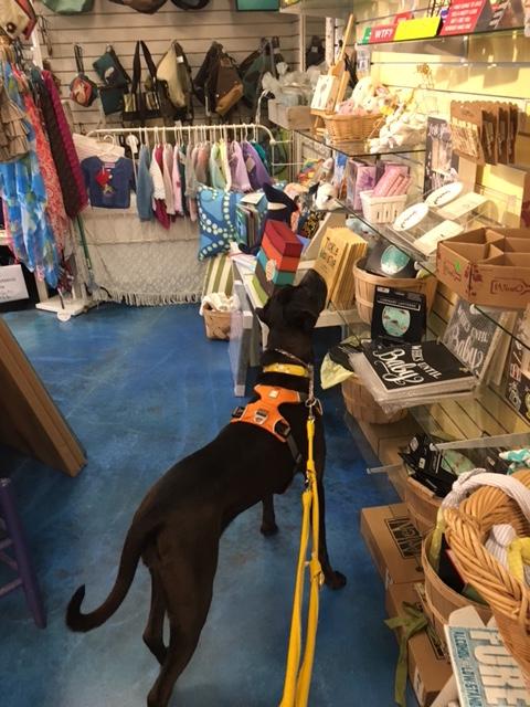 K9sOverCoffee | Winter Getaway to Hilton Head Island's Dog-Friendly Red Roof Inn - Dog-Friendly Gift Shop Art Ware