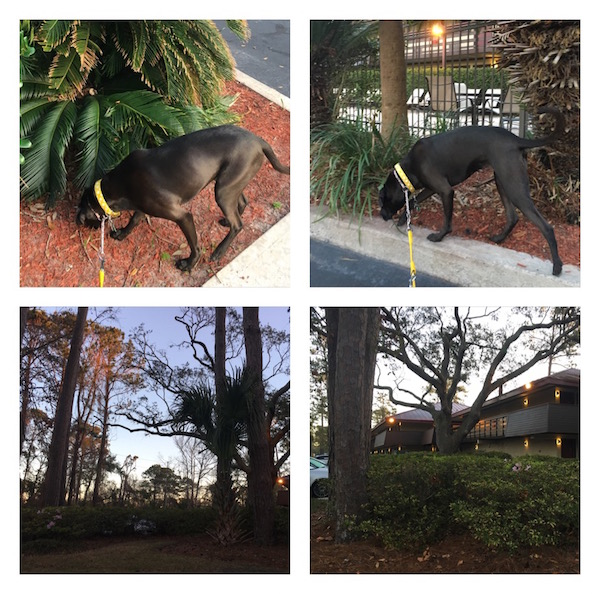 K9sOverCoffee | Winter Getaway to Hilton Head Island's Dog-Friendly Red Roof Inn - Property Pictures 1-4