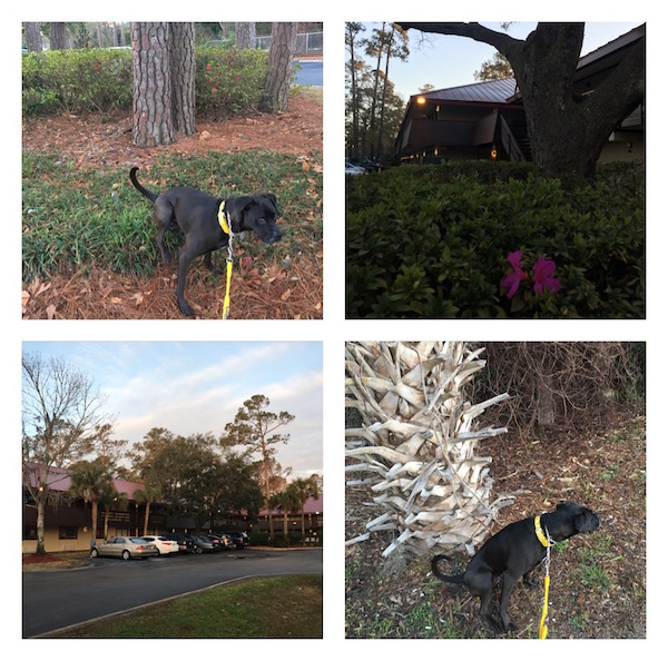 K9sOverCoffee | Winter Getaway to Hilton Head Island's Dog-Friendly Red Roof Inn - Property Pictures 5-8