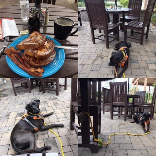K9sOverCoffee | Winter Getaway to Hilton Head Island's Dog-Friendly Red Roof Inn - Watusi's