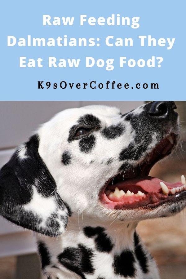 K9sOverCoffee.com | Raw Feeding Dalmatians: Can They Eat Raw Dog Food?