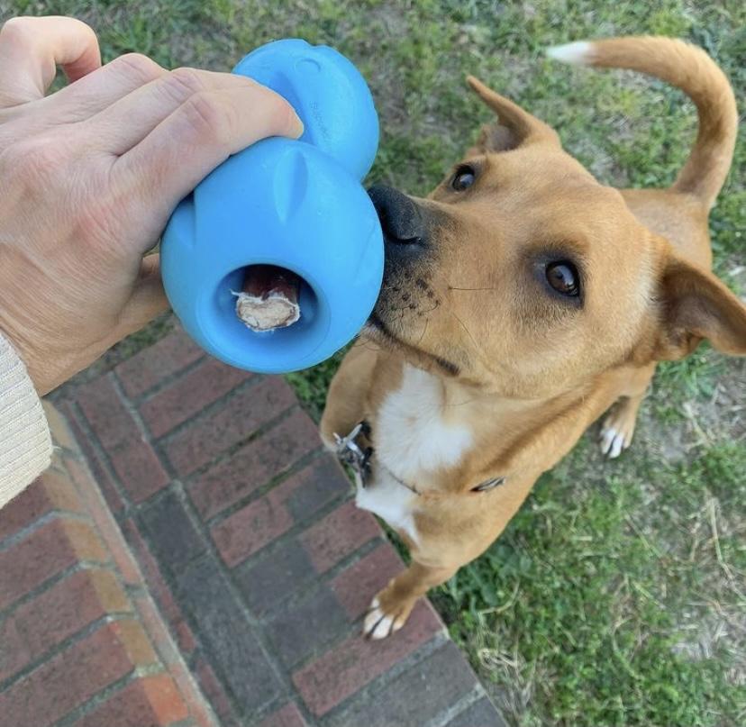 K9sOverCoffee.com | Wally and his West Paw Zogoflex Qwizl dog toy