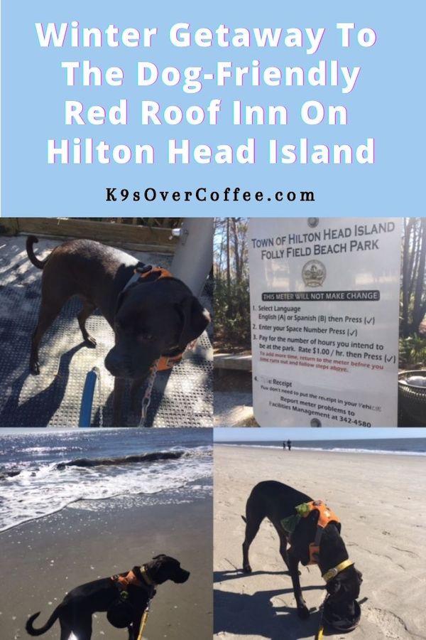 Winter Getaway to Dog-Friendly Red Roof Inn On Hilton Head Island