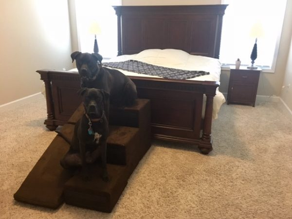 K9sOverCoffee | Gentle Climbing With Indoor Dog Ramp & Stairs - Sitting On The Stairs