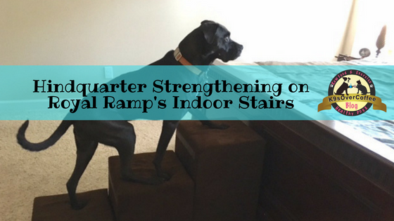 K9sOverCoffee | Hindquarter Strengthening On Royal Ramp's Indoor Dog Stairs