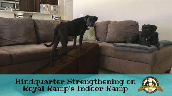 K9sOverCoffee | Hindquarter Strengthening On Royal Ramp's Indoor Ramp