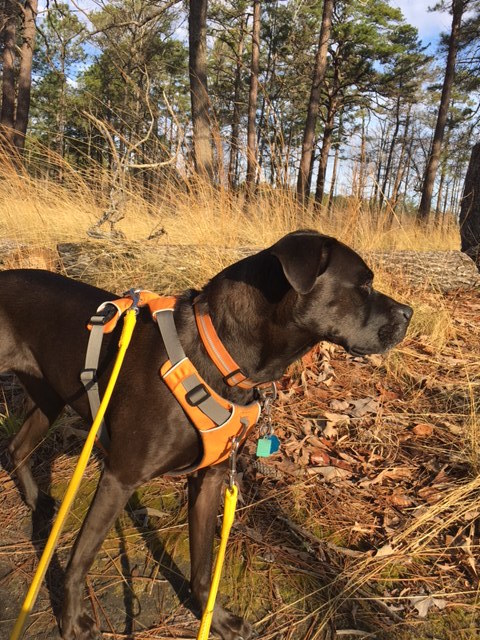 K9sOverCoffee | Ruffwear's Front Range vs Load Up Harness - Which One Is Better? - 2 Points Of Attachment On The Front Range Harness