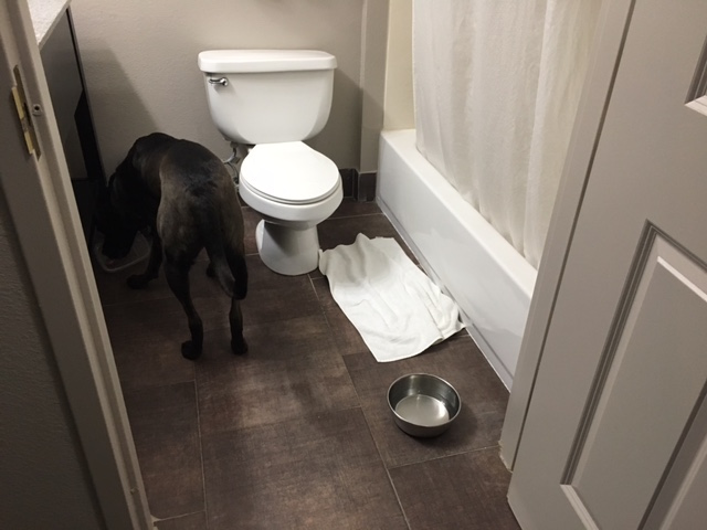K9sOverCoffee | Our First Experience At Pet-Friendly La Quinta Inns & Suites - Buzz in Bathroom