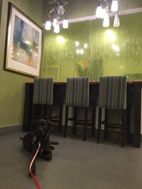 K9sOverCoffee | Our First Experience At Pet-Friendly La Quinta Inns & Suites - Buzz lounging