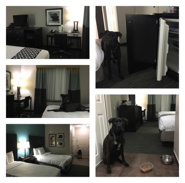K9sOverCoffee | Our First Experience At Pet-Friendly La Quinta Inns & Suites - Our Room