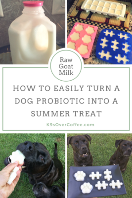 K9sOverCoffee | Raw Goat Milk - How To Easily Turn A Dog Probiotic Into A Summer Treat