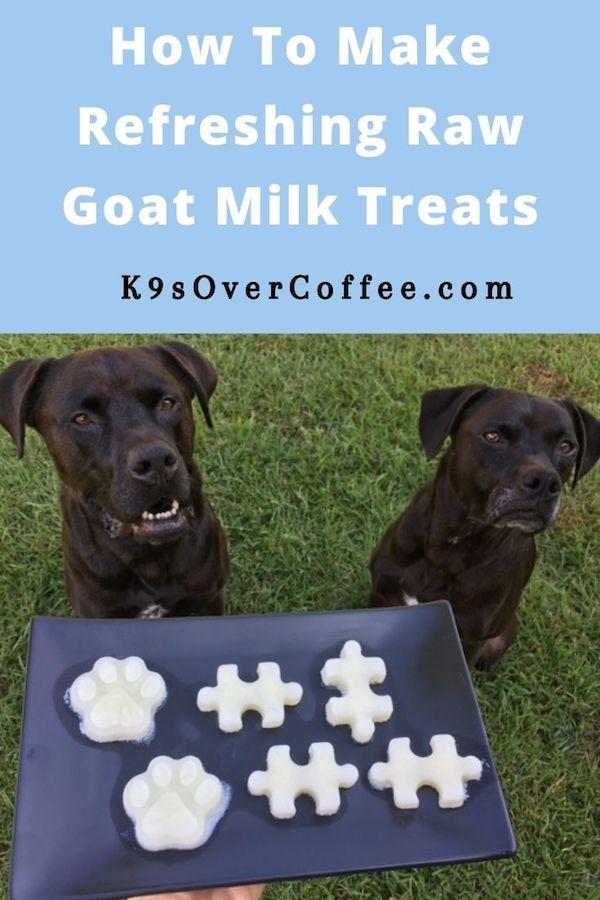 K9sOverCoffee.com | How to Make Refreshing Raw Goat Milk Treats