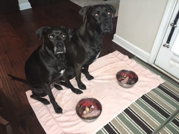 K9sOverCoffee | Delicious Watermelon For The Pups & For Myself - The Pups Waiting Patiently Before Eating Their Raw Dog Food