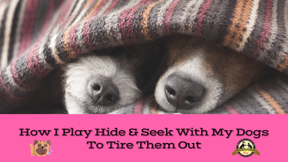 K9sOverCoffee | How I Play Hide & Seek With My Dogs To Tire Them Out